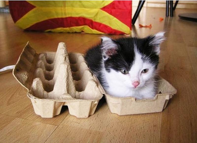擠在小空間的貓18