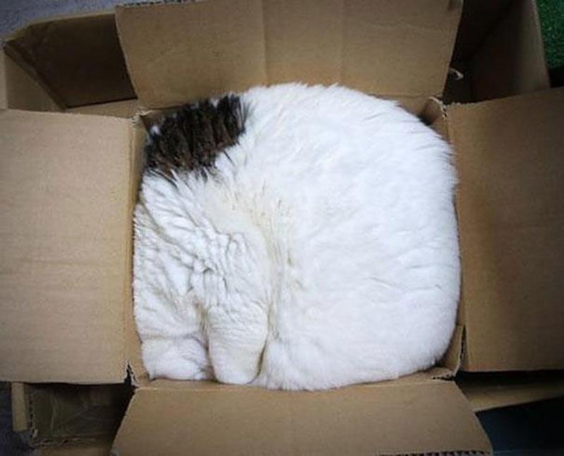 擠在小空間的貓2