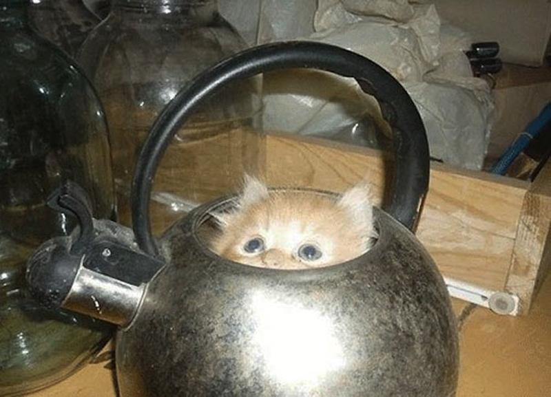 擠在小空間的貓4