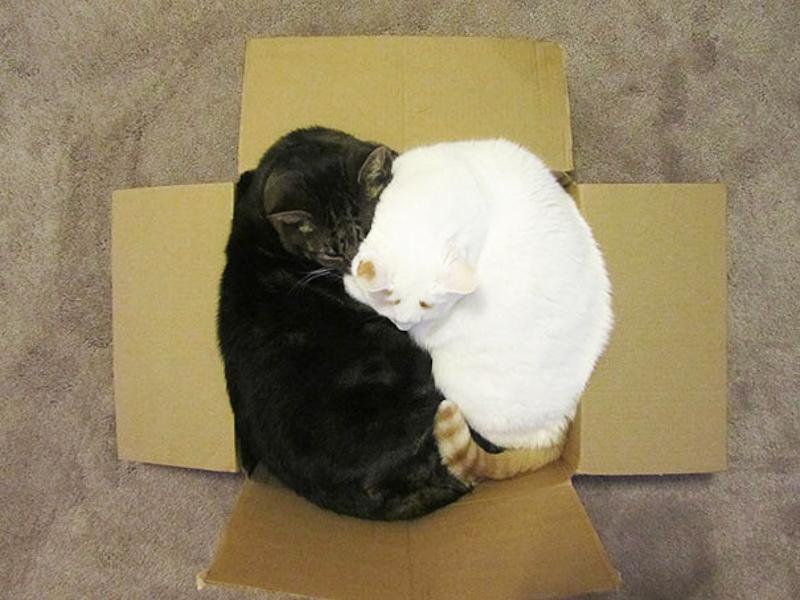 擠在小空間的貓5