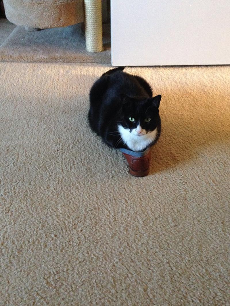 擠在小空間的貓8