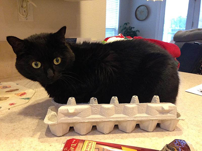 擠在小空間的貓9