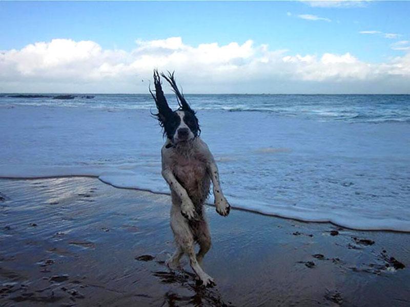 有趣的狗43