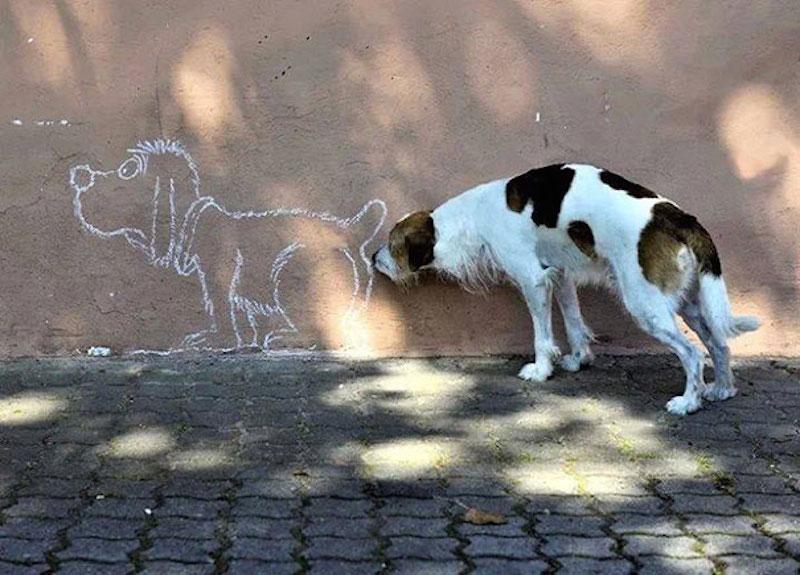 有趣的狗32