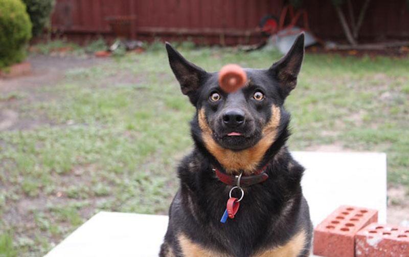 有趣的狗24